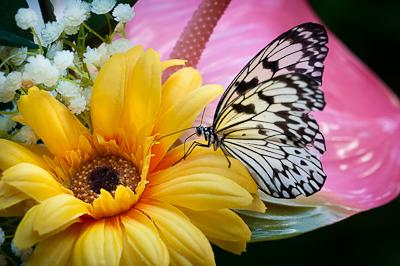 Butterfly at fjärilshuset