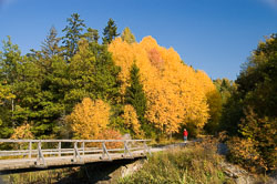 autumn_bridge_lotta.jpg